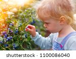 little girl gathering... | Shutterstock . vector #1100086040