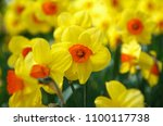 beautiful colorufl yellow... | Shutterstock . vector #1100117738