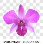 close up purple orchid with... | Shutterstock . vector #1100144429