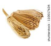 Toothpick Plant   Ammi Visnaga...