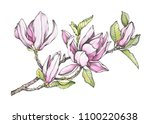 branch of purple magnolia... | Shutterstock . vector #1100220638
