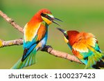 Spring colored birds flirting ...