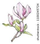 branch of pink magnolia... | Shutterstock . vector #1100245724