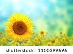 bright yellow sunflower on... | Shutterstock . vector #1100399696