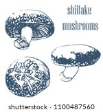 shiitake mushrooms set  hand... | Shutterstock .eps vector #1100487560