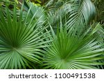 exotic big leaves background... | Shutterstock . vector #1100491538