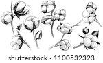wildflower cotton flower in a... | Shutterstock . vector #1100532323