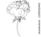 wildflower peony flower in a... | Shutterstock . vector #1100532443