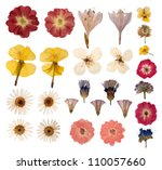 Stock photo pressed flowers isolated on white background 110057660