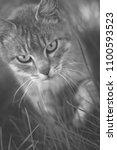 hunting cat alert  wide eyed... | Shutterstock . vector #1100593523