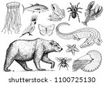 set of animals. reptile... | Shutterstock .eps vector #1100725130