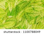 green leaf background. | Shutterstock . vector #1100788049