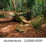 crashed plane of an explorer in ... | Shutterstock . vector #1100814509