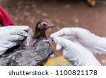 """Veterinary inject vaccine to chicken for prevent Poultry Diseases . Avian influenza is highly pathogenic avian influenza (HPAI). """"Bird flu"""" is a similar to """"swine ,"""" """"dog ,"""" """"horse ,"""" or """"human flu""""."""