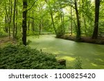 forest landscape in the spring... | Shutterstock . vector #1100825420