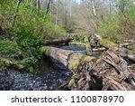 saltwater state park in des... | Shutterstock . vector #1100878970