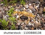 beautiful yellow terrestrial...   Shutterstock . vector #1100888138