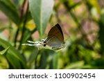 fluffy tit butterfly.  ... | Shutterstock . vector #1100902454