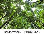 Sunny Through The Canopy