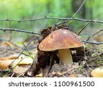 white mushroom in the forest.... | Shutterstock . vector #1100961500