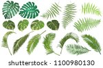 frond leaves. set of fern  palm ... | Shutterstock .eps vector #1100980130