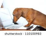 Stock photo dog using computer 110100983