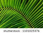 close up of light green coconut ... | Shutterstock . vector #1101025376
