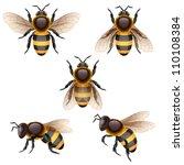 Bees On White  Eps 10