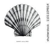 scallops seashell vintage clip... | Shutterstock .eps vector #1101109814