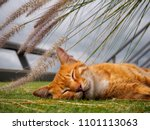 Stock photo small cute kitten cat sleeping outside in the park with flower grass background 1101113063