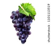 isolated dark grape with green... | Shutterstock .eps vector #1101113519