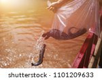 release catfishes in plastic... | Shutterstock . vector #1101209633