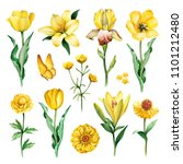 Stock photo watercolor illustrations of yellow flowers 1101212480