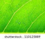 green leaf macro | Shutterstock . vector #110125889