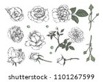set of hand drawn  floral...   Shutterstock .eps vector #1101267599