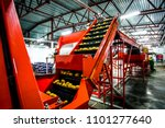 potato sorting  processing and... | Shutterstock . vector #1101277640