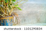 tree pot with old plaster wall... | Shutterstock . vector #1101290834