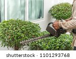 hedge trimmer in action.cutting ... | Shutterstock . vector #1101293768