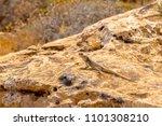 lizard sitting on a stone | Shutterstock . vector #1101308210