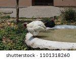dehradun zoo uttarakhand | Shutterstock . vector #1101318260