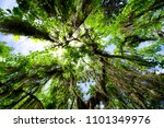 oak road trees low angle view | Shutterstock . vector #1101349976