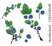 branches with blueberries | Shutterstock .eps vector #1101418109