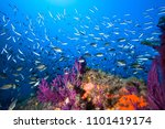 lots of fish in a mediterranean ... | Shutterstock . vector #1101419174