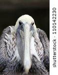 pelican portrait | Shutterstock . vector #110142230