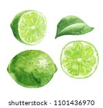 hand drawn watercolor lime... | Shutterstock . vector #1101436970