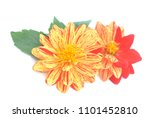 two tone red and orange dahlia... | Shutterstock . vector #1101452810