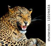 leopard | Shutterstock . vector #110146616