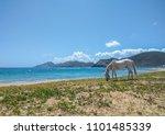 caribbean unicorn eating weed | Shutterstock . vector #1101485339