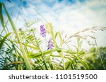 wildflowers and wild grass in... | Shutterstock . vector #1101519500