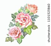 watercolor roses.flowers... | Shutterstock . vector #1101525860